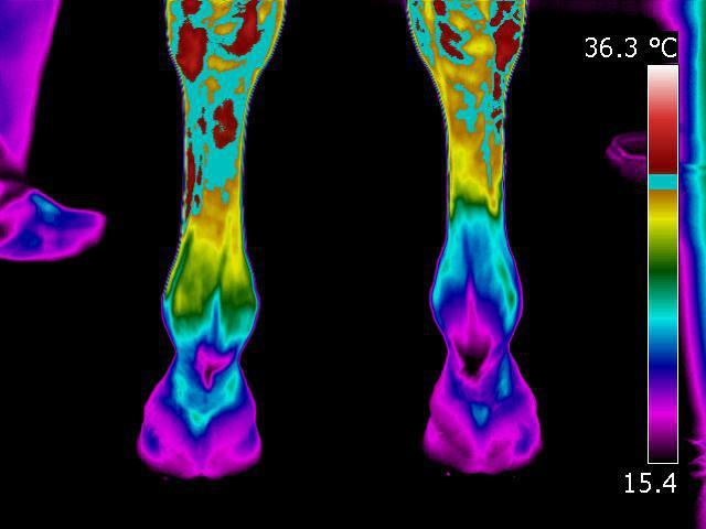 Identified injury using infrared