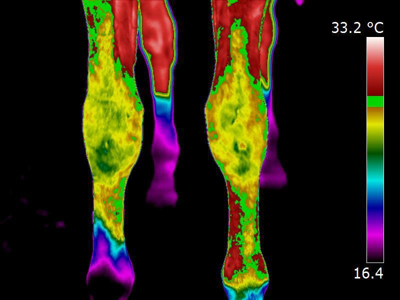 Equine Injury detection using infrared thermogaphy