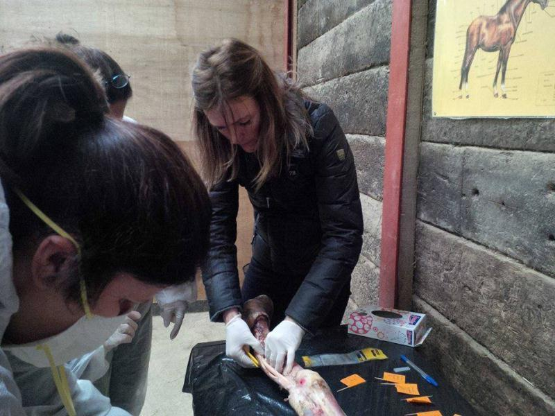 Equine infrared thermography training