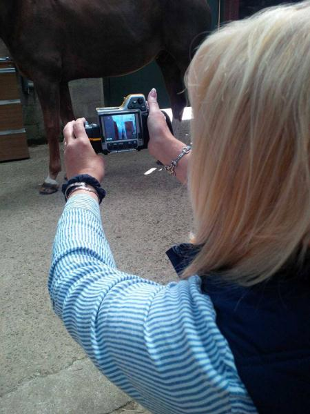 equine infrared consultancy