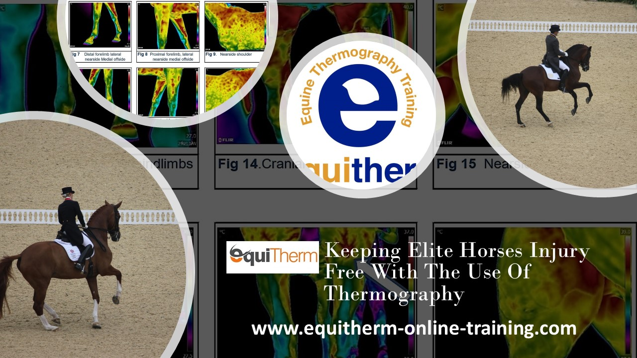 Equine Thermography Technicians Certificate 5 Day workshop